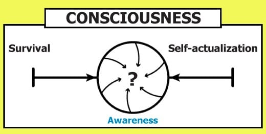 consciousness continuum converges between survival and self-actualization to become awareness